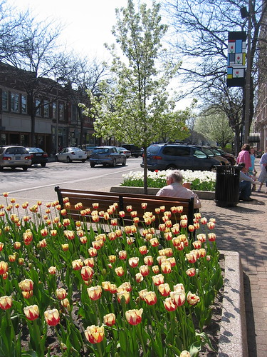 More Downtown Tulips