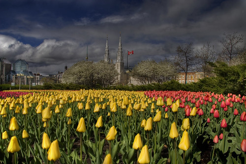 Tulip mania strikes the nation's capital