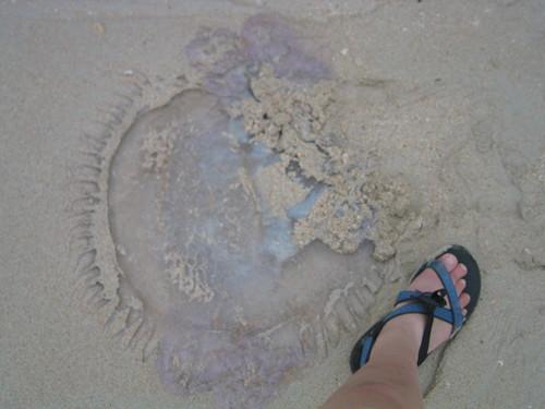 thailand, railay, phra nang, jellyfish IMG_1208.JPG