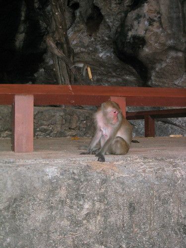 thailand, railay, monkeys, phra nang IMG_1230.JPG