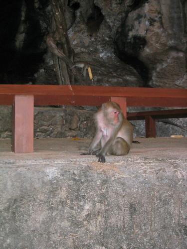 thailand, railay, monkeys, phra nang IMG_1230.JPG