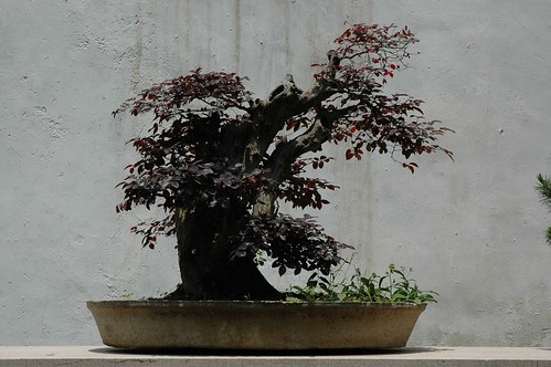 PenJing in Suzhou