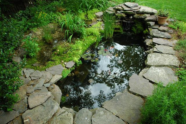 Backyard Koi Pond Kits : Pond & Bog  Flickr  Photo Sharing!