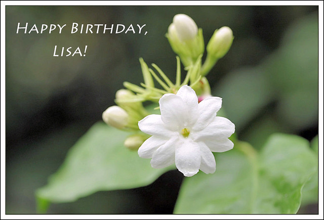 happy birthday, lisa! | happy birthday, lisa - i've chosen ...