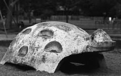 Playground turtle