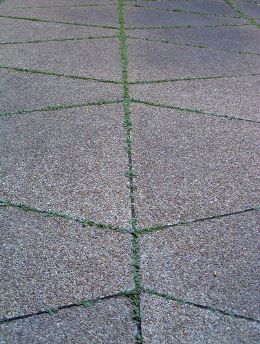 Grass between cement
