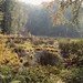1990 Germany // Wandern im Naturpark Lauenburgische Seen // by maerzbecher-Deutschland zu Fuss