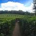 Labyrinthe Géant des monts de Guéret, Limousin, France