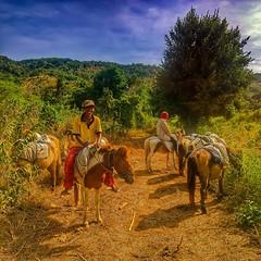 Kuda Lokal Sumbawa  Empang Sumbawa Sumbawa Island NTB, Indonesia @folkindonesia @ngobrolkota  #indonesia #u_phy #infotourismindo #lumia1020 #switcheyesnap #WPphoto @natgeopro #nokia #idlumiaography #natgeo #instanusantara  #kofipon #lumia #nothingbutanoki