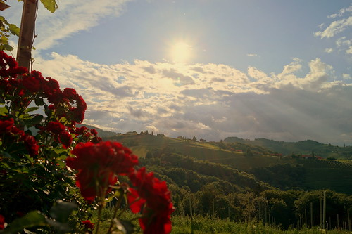 roses sun landscape kitzeck sal1855 slta58