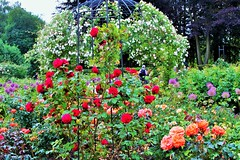 Dunham Massey Rose Garden, Cheshire