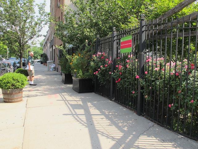 Greenest Block in Brooklyn 2015