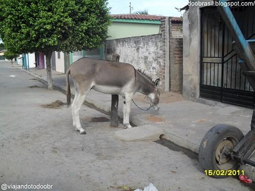 Maravilha - Jegue