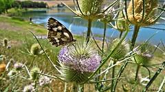Flora e fauna del Lago..