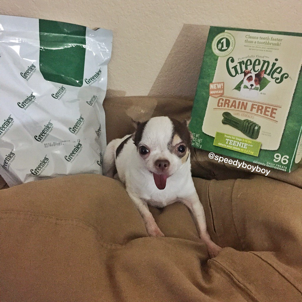 SpeedyBoyBoy: San Diego Dog Blog: Greenies Grain Free Dental Chews