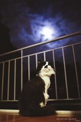 Gata de la luna