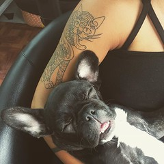 :tongue: #frenchbulldog #frenchiesofinstagram
