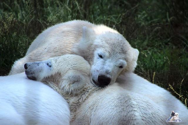 ouwehands dierenpark 30.06.2015  114