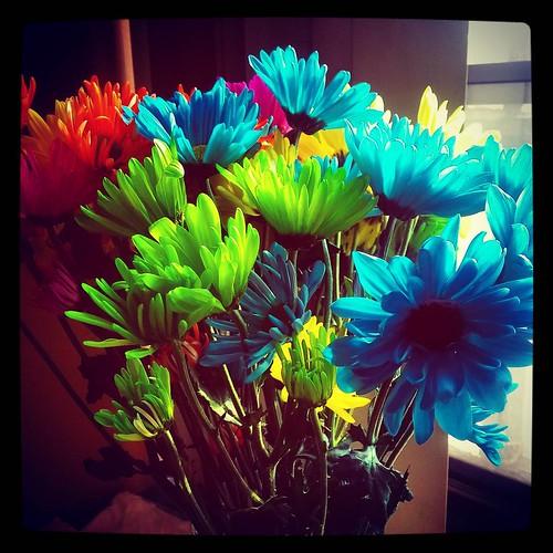 Flowers. 🌺🌸💐
