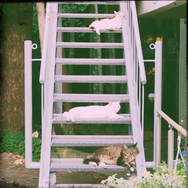 Cats lying on the stairs