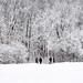winter wonderland by marianna_a.