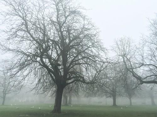 Foggy Soton Park