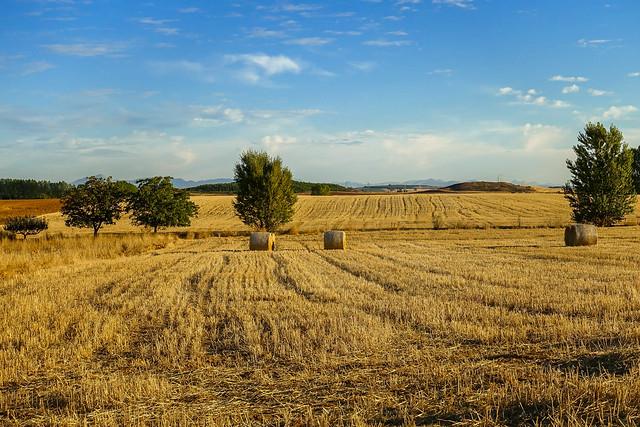 Gillians Camino Pics-6