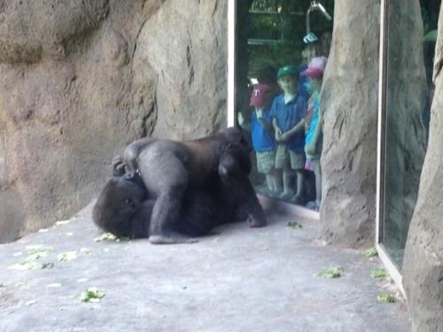 foto graciosa de animales jugando a ser mayores