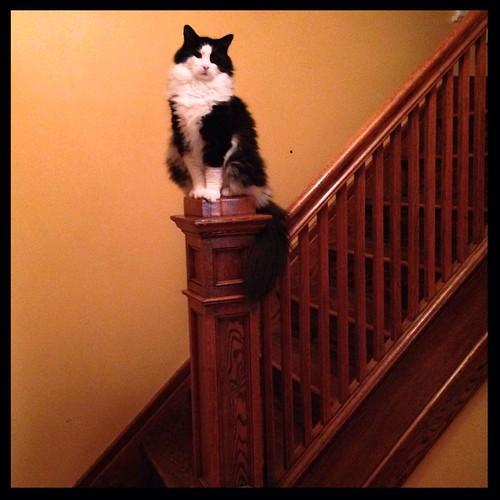 This is new... #catsofinstagram #tuxedocat #tuxedocats #felixofinstagram