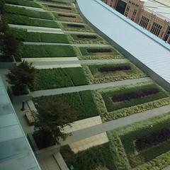 Unexpected rooftop gardens.