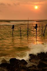 SriLanka 斯里蘭卡 2016
