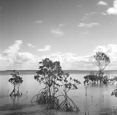 Fraser Island - Ilford HP5+ 120 film
