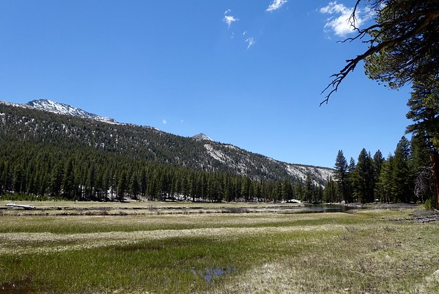 McClure Meadow, m848