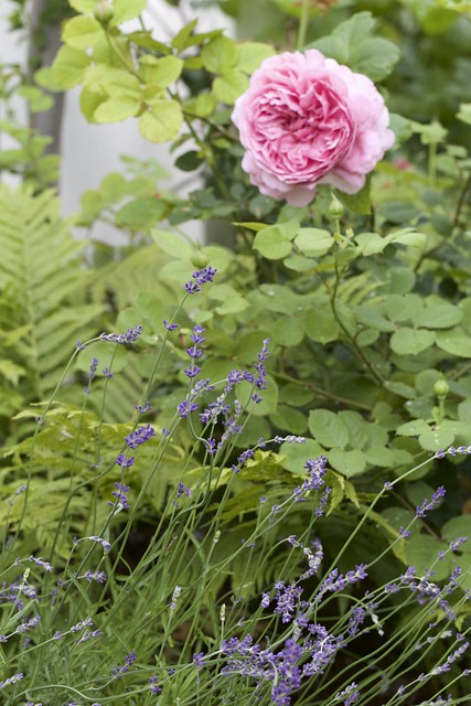 June 10th garden