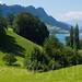 Hertenstein Meadow on Lake Lucerne, Weggis, Central Switzerland