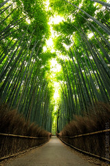 Bastion of the Bamboo
