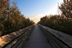Wetlands Boardwalk, South Padre Island Birding And Nature Center - Texas