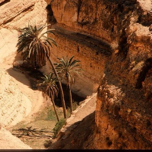 Middes-Oasis de montagne-Tunisie-avril 1996