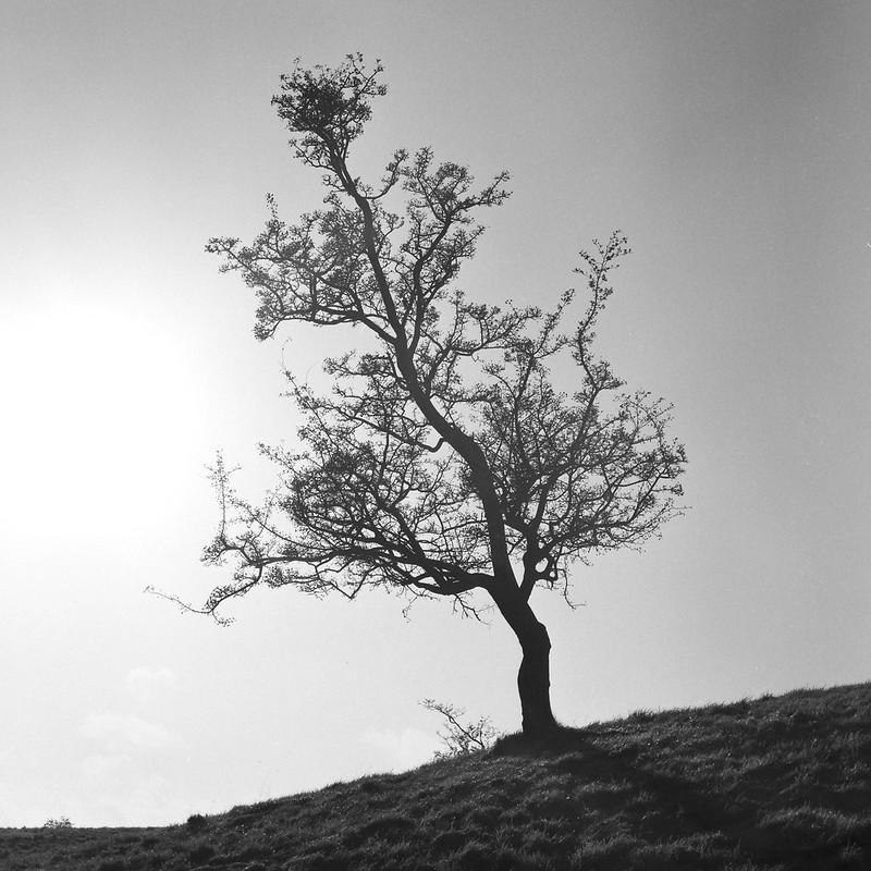 Tree. Dublin, May 2015
