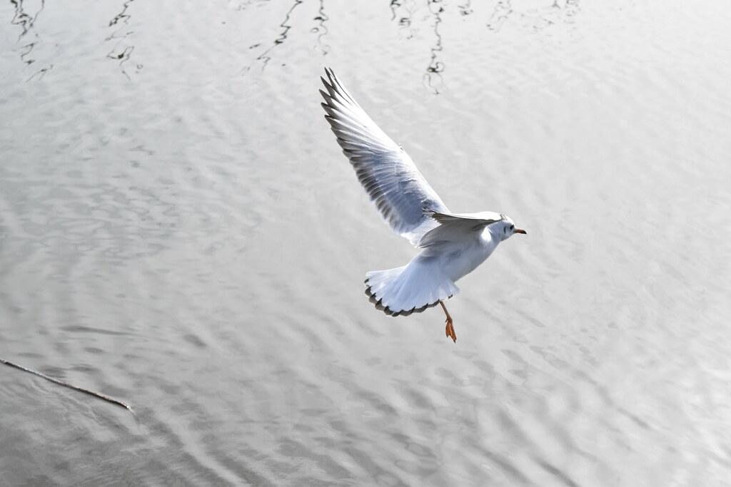 着地する鳥