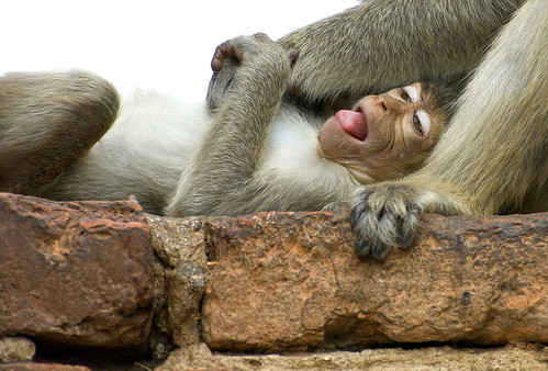 1128 Monkey business--Ayuthaya , Thailand