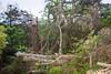 Storm damage (4)
