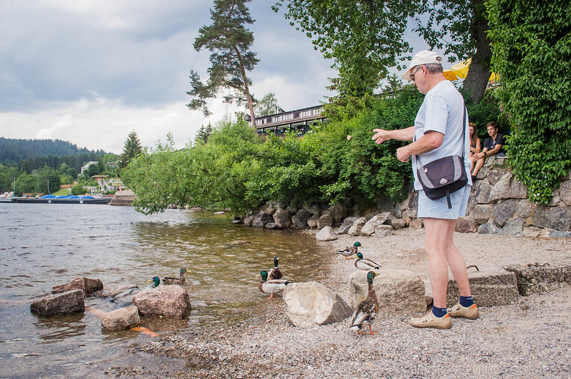 Feeding Ducks at Lake Titisee