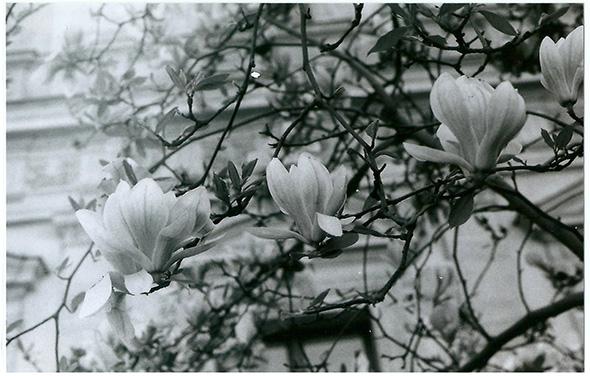 CCI_lyon_magnolia