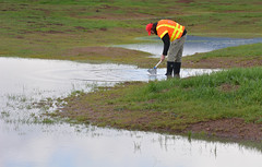 puddle(0.0), mudflat(0.0), shore(0.0), waterway(0.0), wetland(1.0), water(1.0), reflection(1.0), pond(1.0), marsh(1.0),