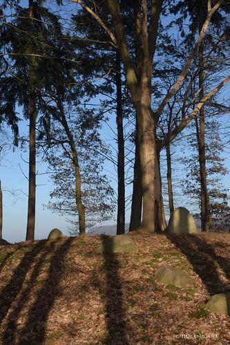forest bäume hügelgrab norddeutschland schatten shadows stones stein
