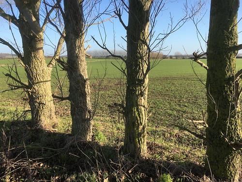 Tree boundary