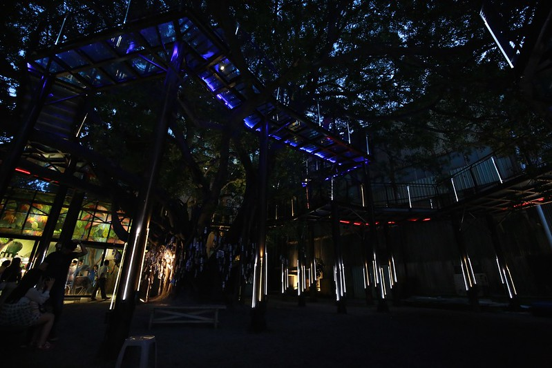 百年老樹與天空步道