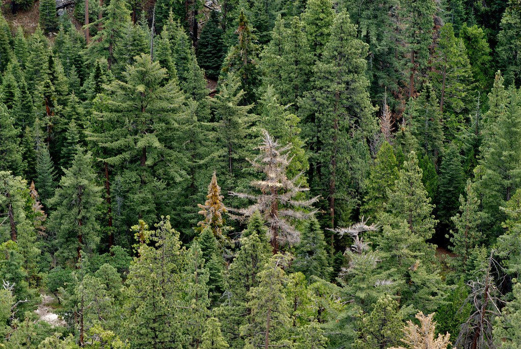 Hotels Near Sequoia National Forest