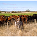 Photographing Cows Near Coonabarabran by Craig Jewell Photography